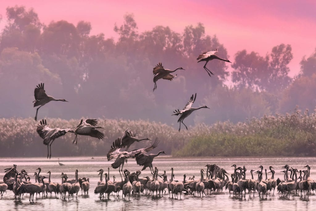 Hula Valley Reserve Israel by Protasov AN Shutterstock