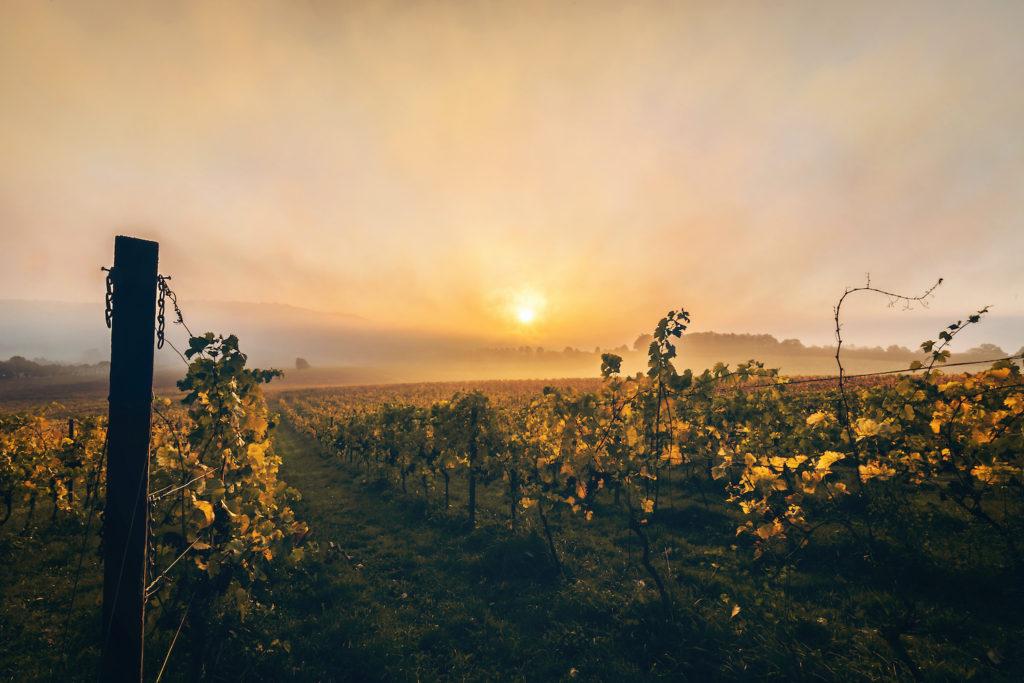 Denbies Winery Surrey by Jools Hart Photography Shutterstock best vineyards England