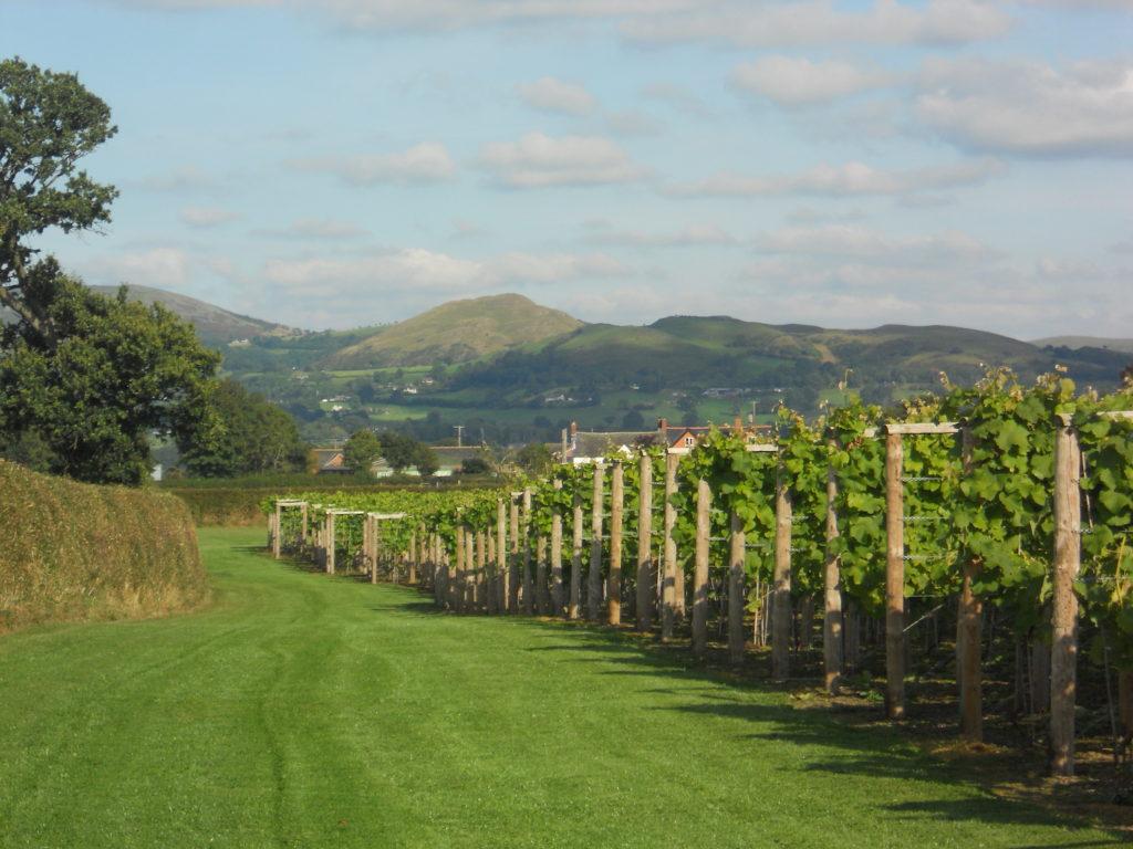 Kerry Vale Vineyard Shropshire by Kerry Vale Vineyard
