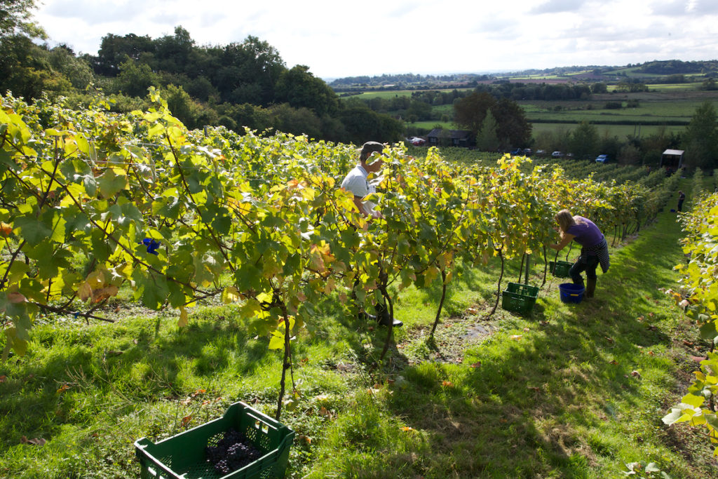 Smith and Evans Estate Somerset by Smith and Evans Wine best vineyards england