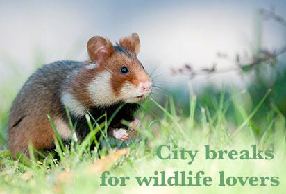 European city breaks for wildlife lovers