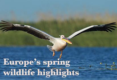 Europe's spring wildlife highlights