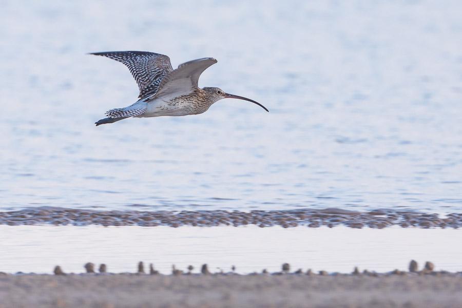 Birdwatching Socotra