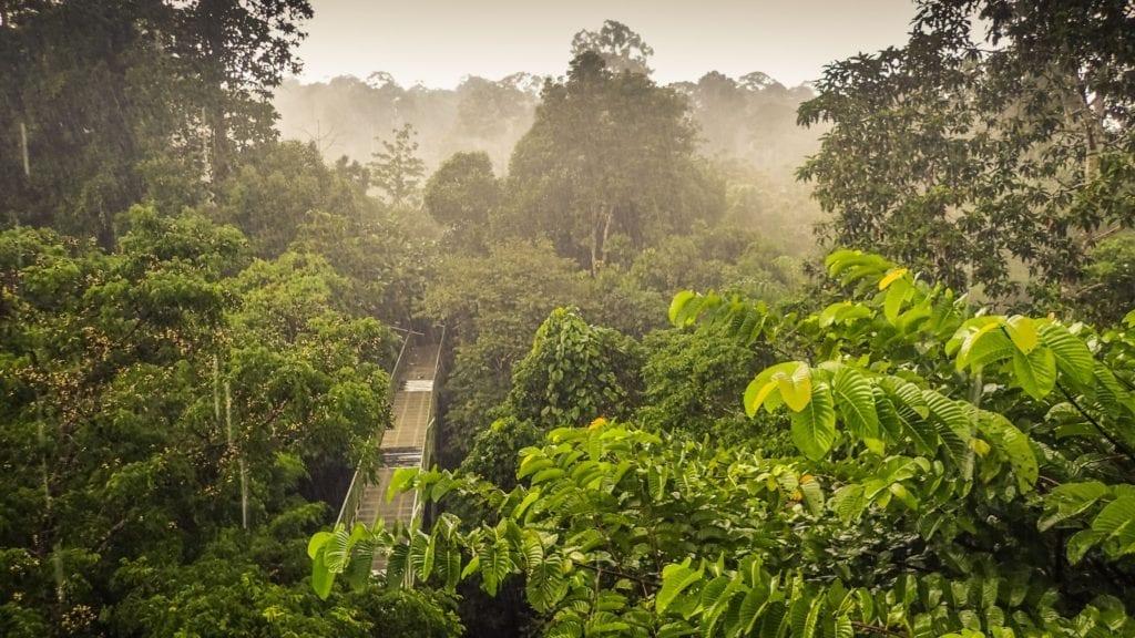 Kinabalu, Borneo by Diego Cue, Wikimedia Commons