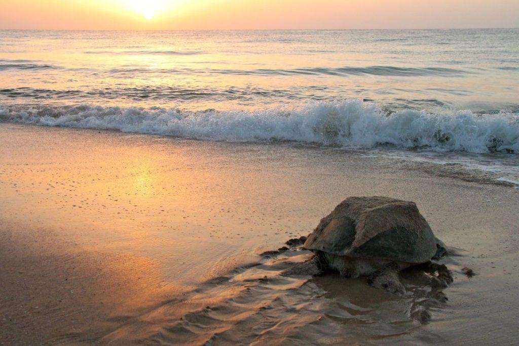 Green turtle Mike Unwin