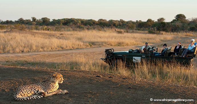 Game drive cheetahs South Africa by Ariadne Van Zandbergen, Africa Image Library