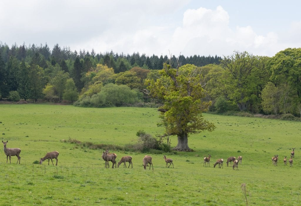 Clashing antlers on Exmoor with Discovery Safaris