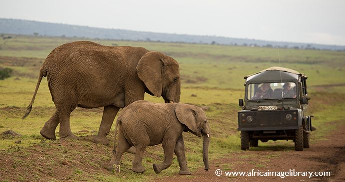 Elephant safari Kenya Ariadne Van Zandbergen Africa Image Library