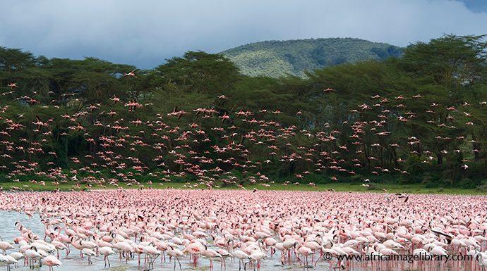 Lake Naivasha Kenya by Ariadne Van Zandbergen Africa Image Library