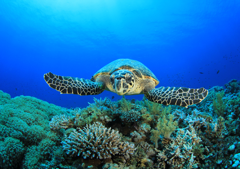 Turtle Sao Tome  best places to see turtles