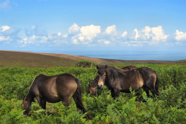 Discovery Safaris horses