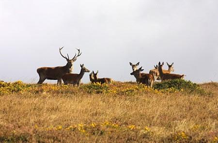 Discovery Safaris deers