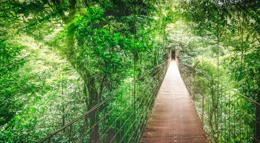 Monteverde Cloud Forest best wildlife destinations Costa Rica
