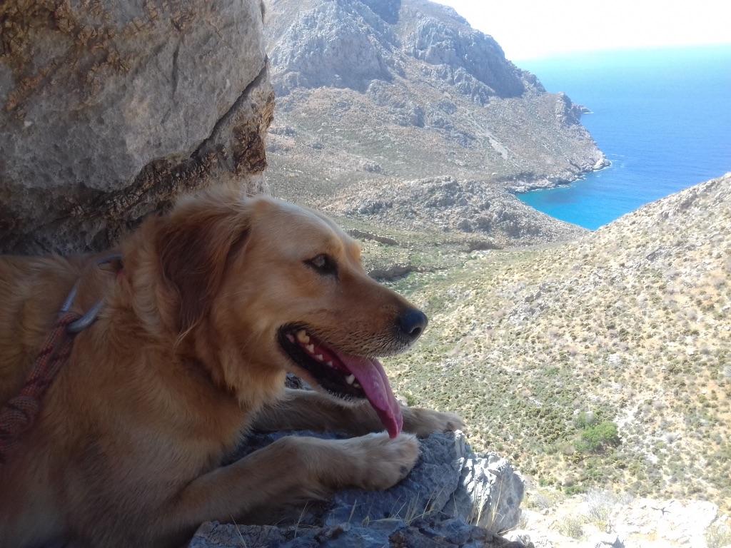 lisa golden retriever wild abandon