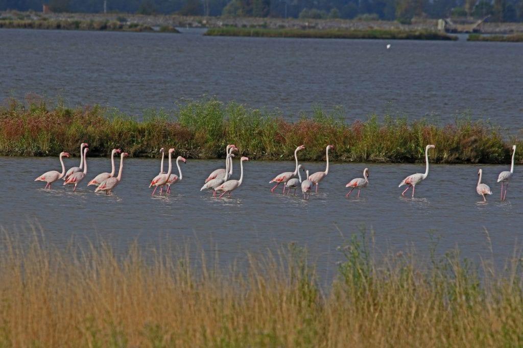 Flamingos Parco del Delto del Po Italy travel lockdown