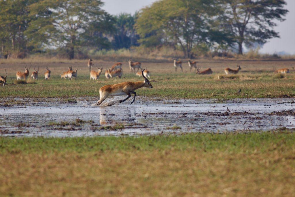 Kafue Lechwe National Park Zambia by Foto Mous Shutterstock