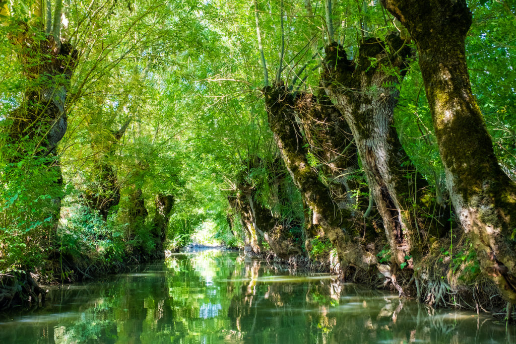 Marais Poitevin Waterways Vendee France by Elisa Locci Shutterstock
