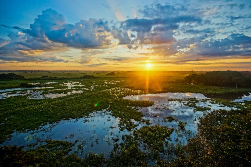 Pantanal Wetland Brazil Sunrise by Andre Maceira Shutterstock