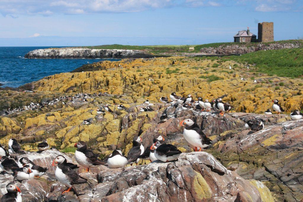 Puffins Farne Islands travel