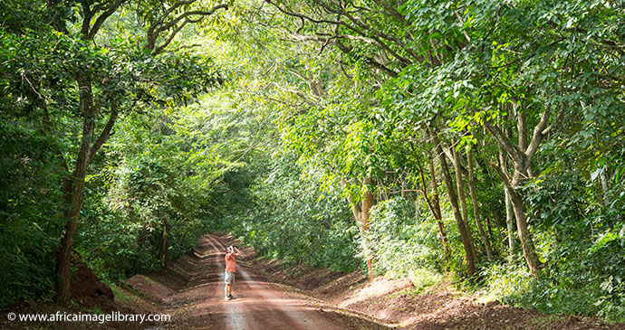 Budongo Forest Reserve Uganda by Ariadne Van Zandbergen