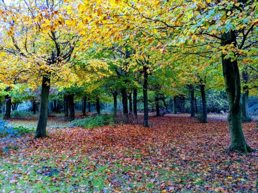 Burnham Beeches Berkshire by Anna Moores