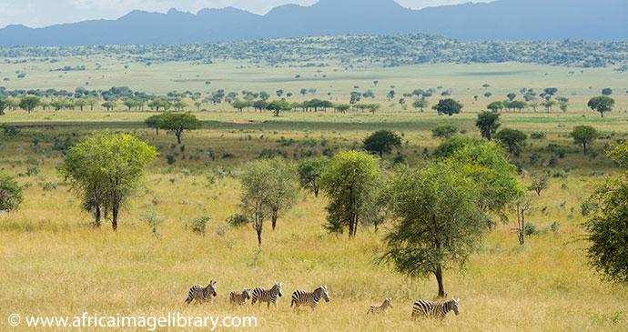 Kidepo National Park Uganda by Ariadne Van Zandbergen Africa Image Library