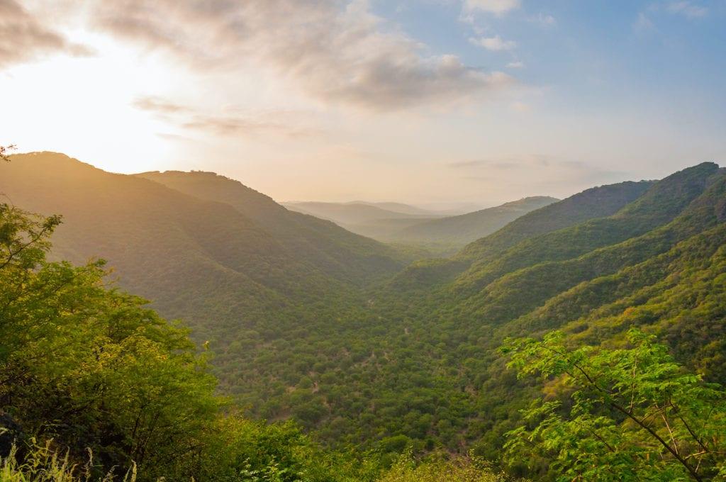 Salalah Forest during Khareef season by Ashraf Hamdan Shutterstock