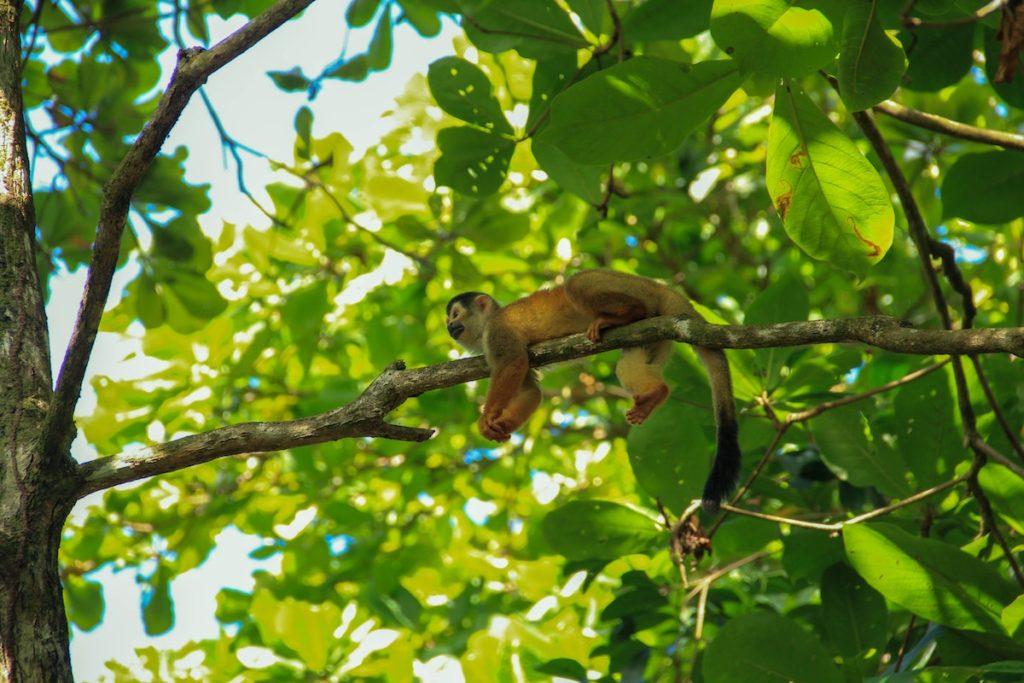 Monkey Forest Costa Rica by Ezgi Kimball Unsplash