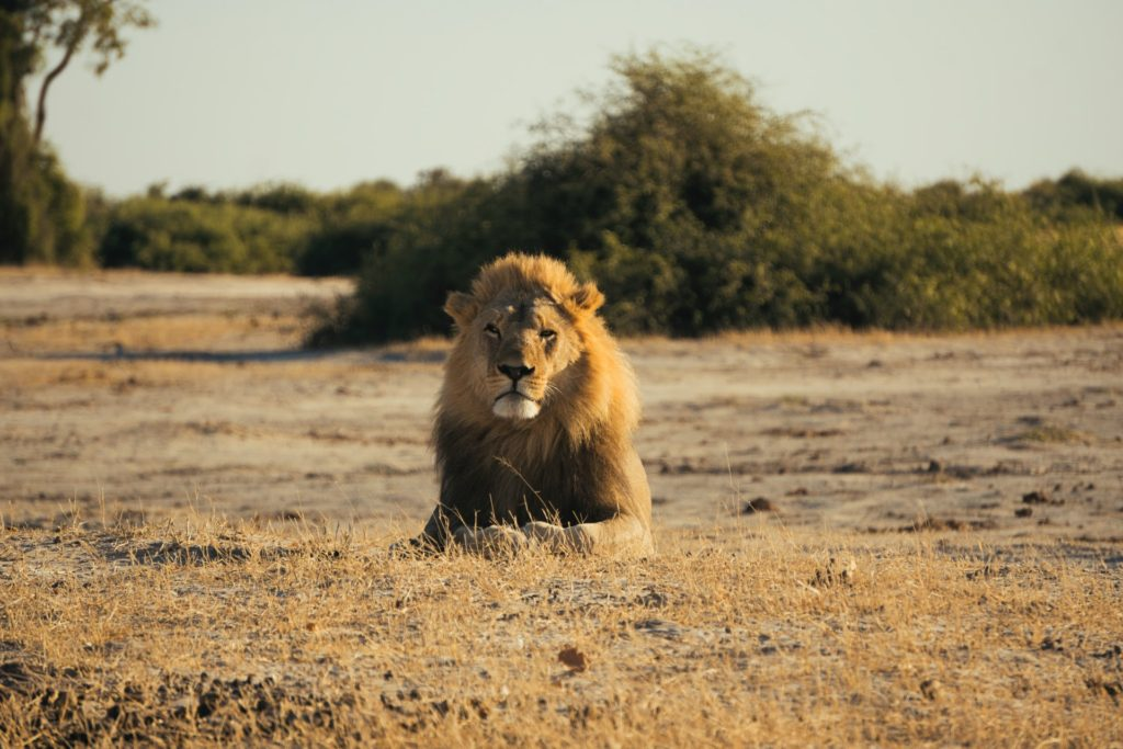 Where to see the Big Five in Botswana