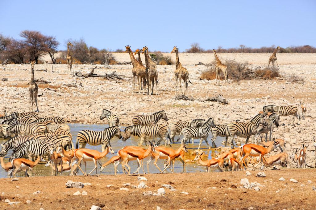 Waterhole Etosha National Park Namibia by Paula French Shutterstock