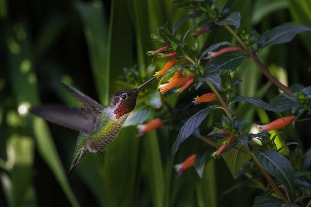 Hummingbird Costa Rica Exodus Travels, travel deals 2021