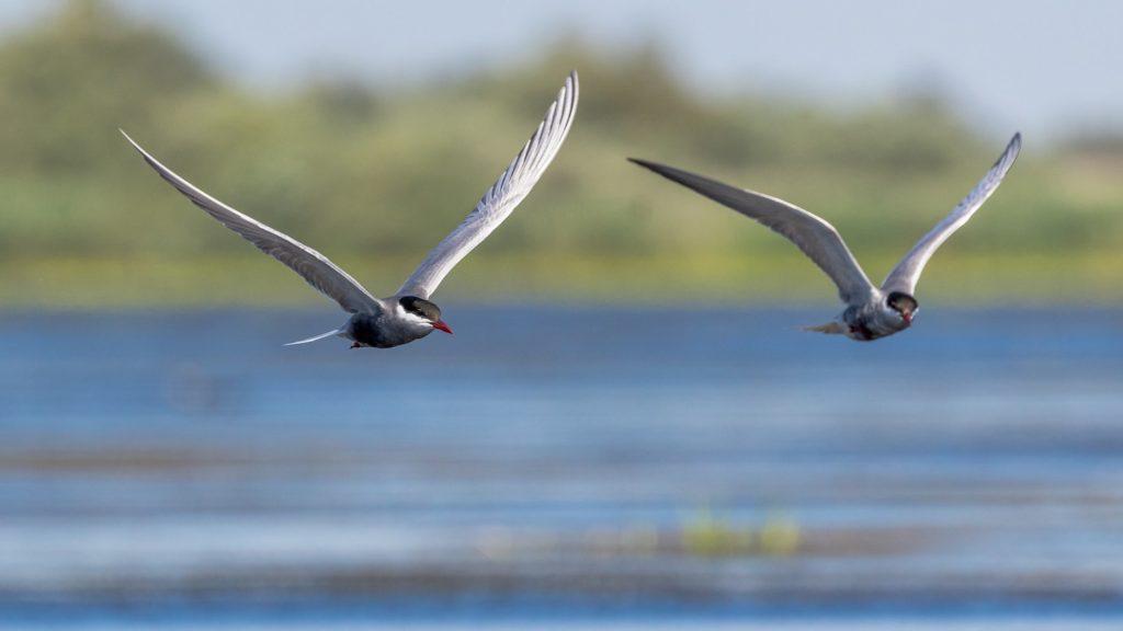 Birds Danube Delta Romania by Zdeněk Macháček, Unsplash