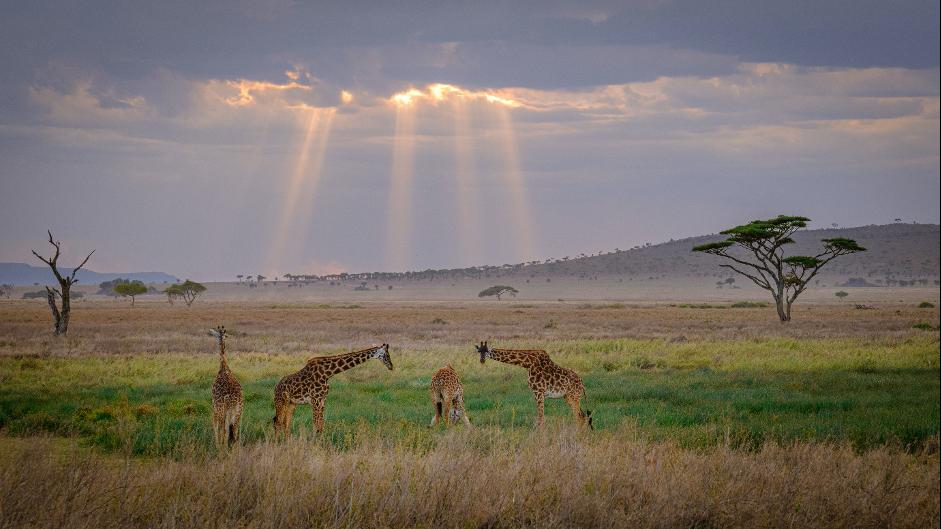 In photos: a Tanzanian adventure
