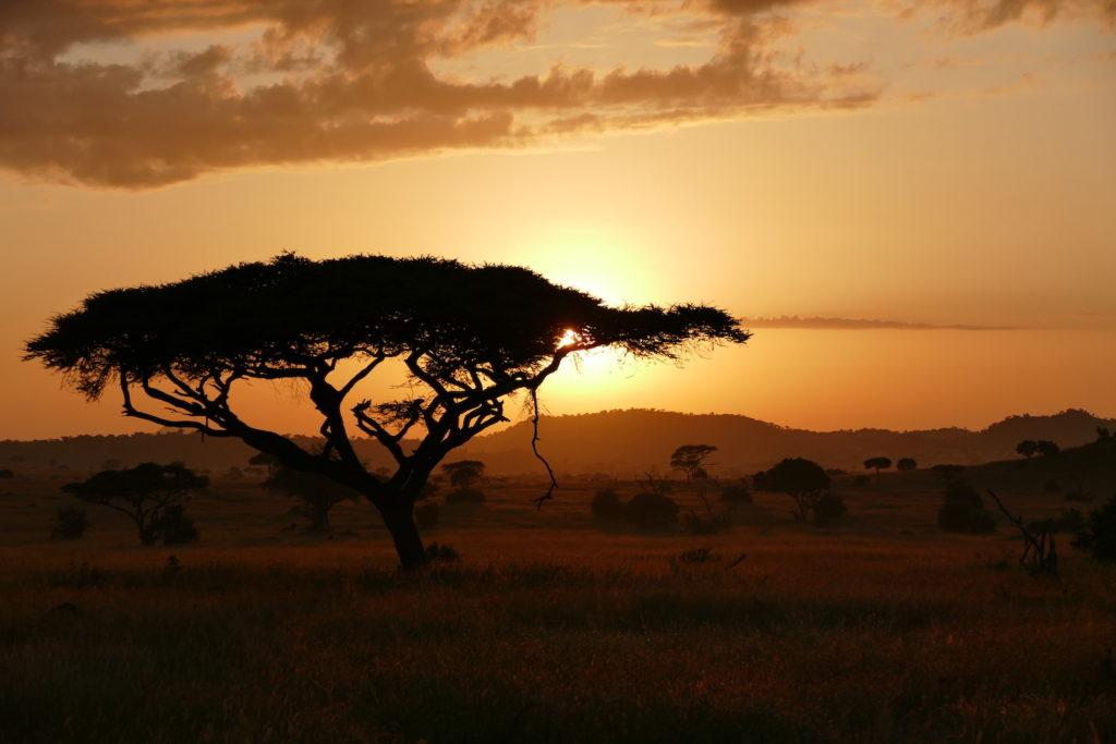 Serengeti Sunrise Safari Consultants