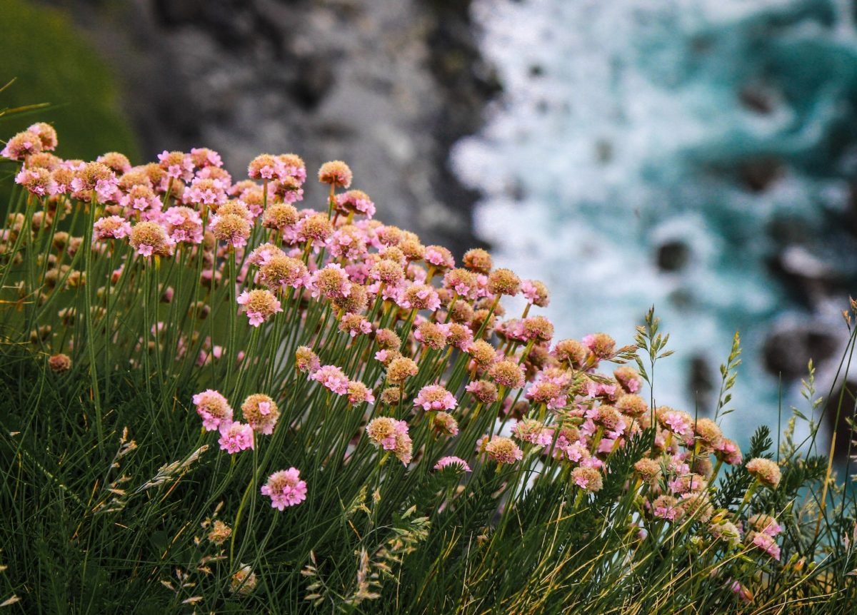 The Burren flowers Ireland European wildlife breaks by Connor Misset Unsplash