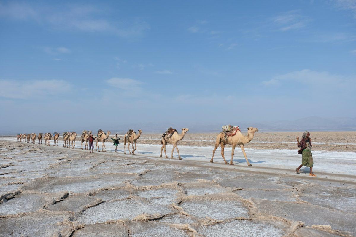 camels, danakil, travel in ethiopia, daniele levis pelusi, unsplash