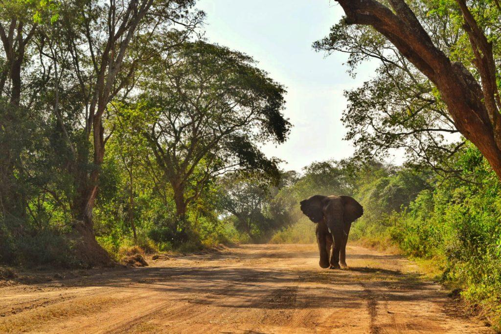 elephant, akagera, rwanda, Alex shema, wikimedia