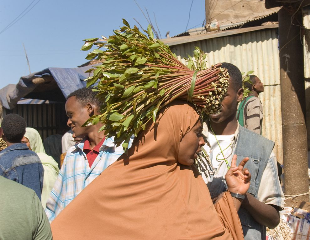 khat, Harar, food and drink in ethiopia, A. Davey, Wiki