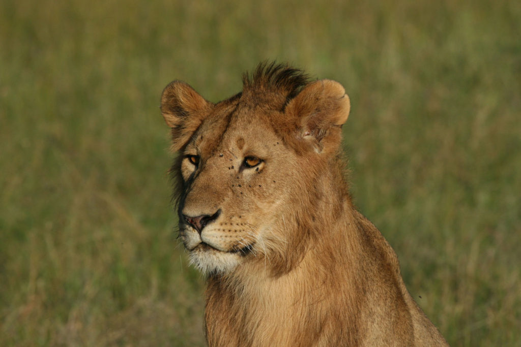 Lion Safari Consultants Travel deals best
