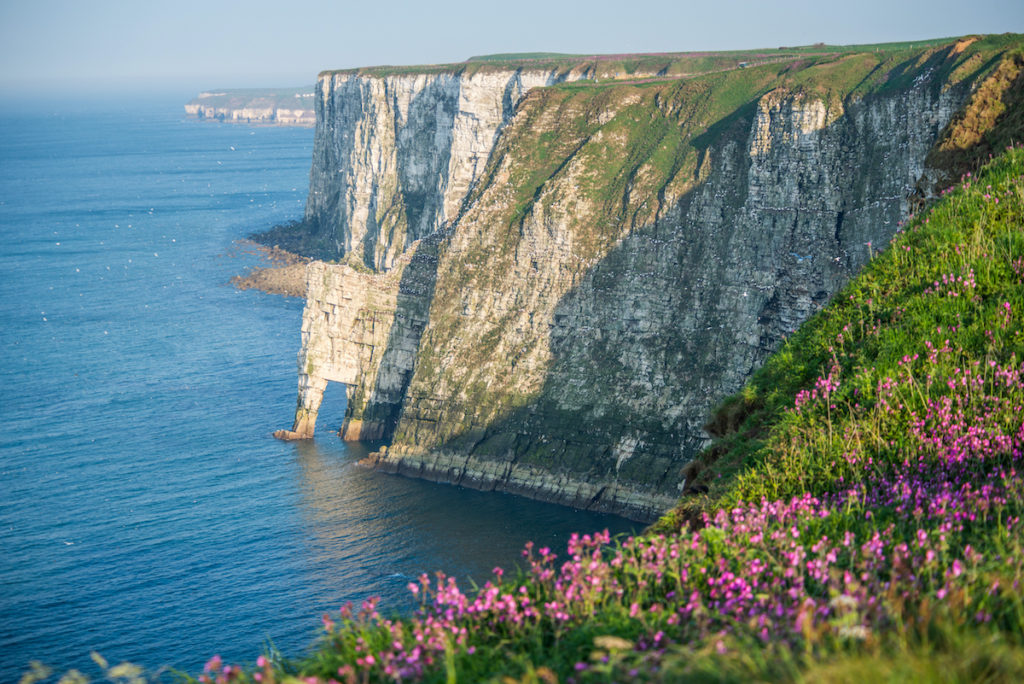 Bempton Cliffs Nature Reserve Yorkshire by Chee Hoong Loh, Shutterstock