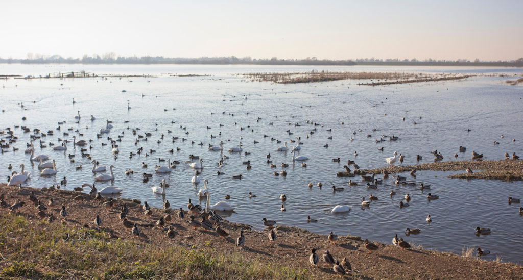 RSPB Ouse Washes Cambridgeshire by tony mills Shutterstock
