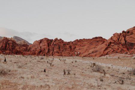 The Dream of the Desert