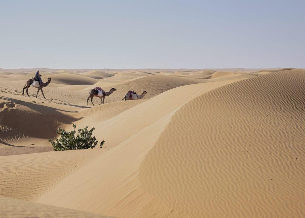 Camels desert dunes Sudan by Nicholas Holt