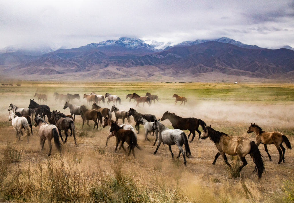 Horses Kyrgyzstan by Bharat Patel