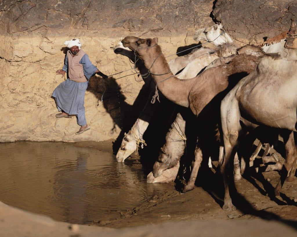 Camels Sudan desert by Nicholas Holt