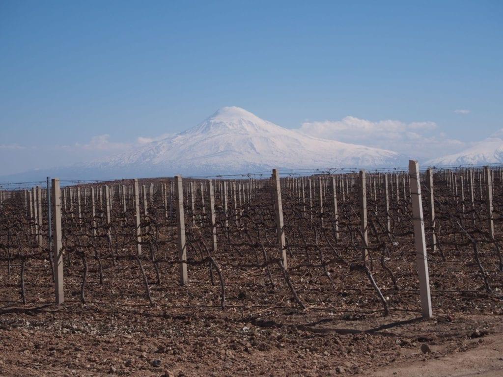 Vineyards in the shadows of Mount Ararat, Armenia