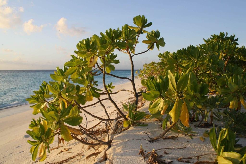 Beach Bird Island Seychelles by Paolo Marco Ripamonti Flickr