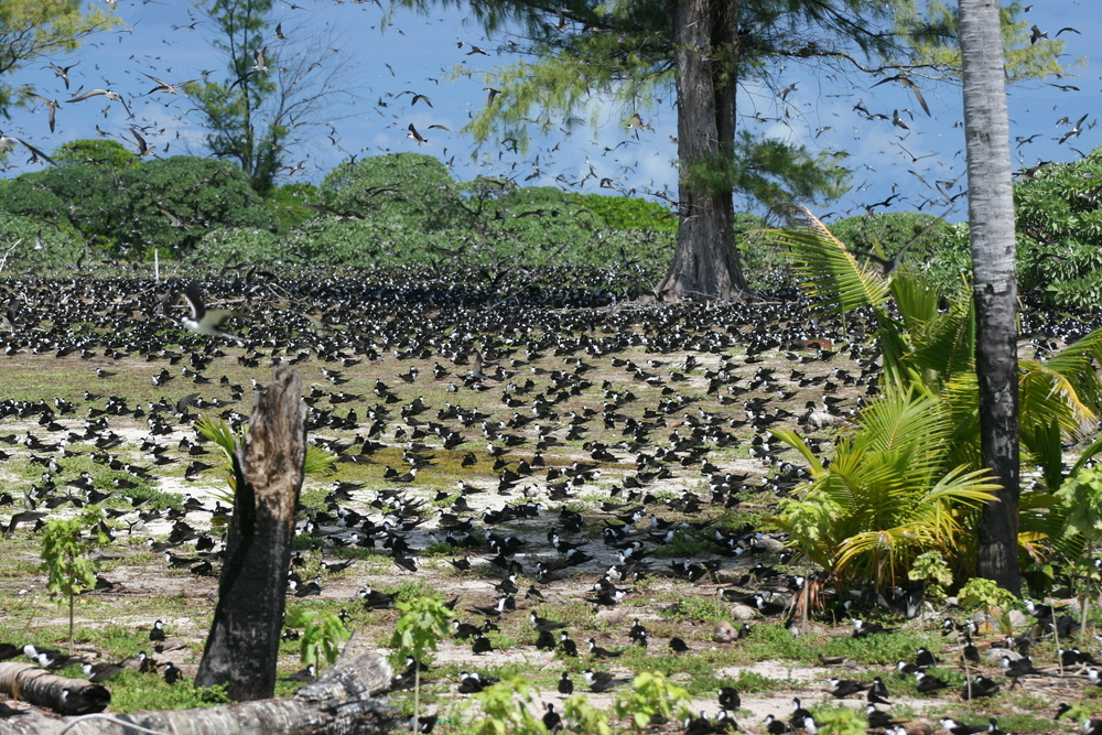 Bird Island Seychelles by david5962 Shutterstock