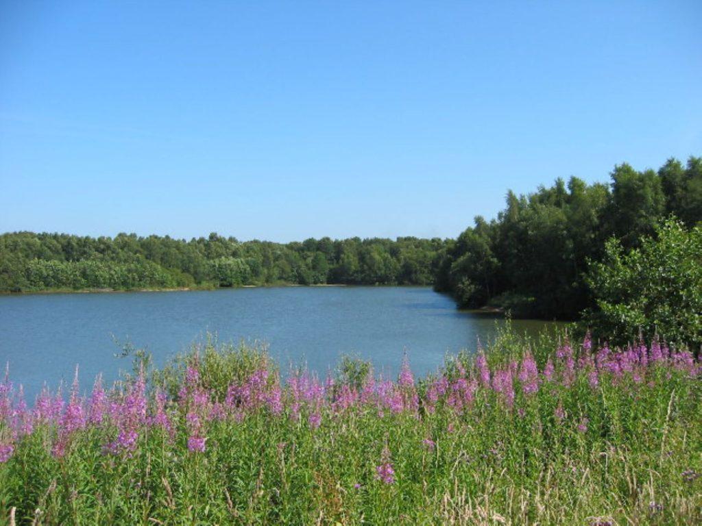 Brereton Heath Nature Reserve, Cheshire, Bill Webb