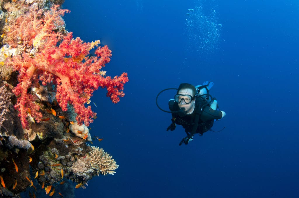 Corals Scuba Diver Seychelles by JonMilnes Shutterstock